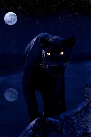 http://aroundthesphere.files.wordpress.com/2009/07/black-panther.jpg